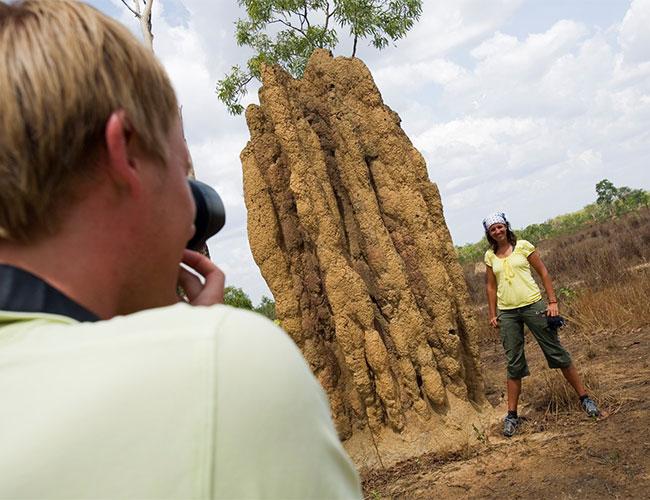 Termite mound NT