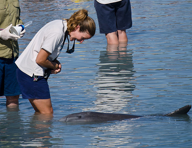 Interacting with wild dolphins Monkey Mia