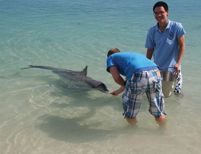 Controlled feeding wild dolphins Monkey Mia