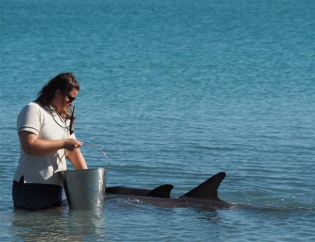 Feeding wild dolphins Monkey Mia