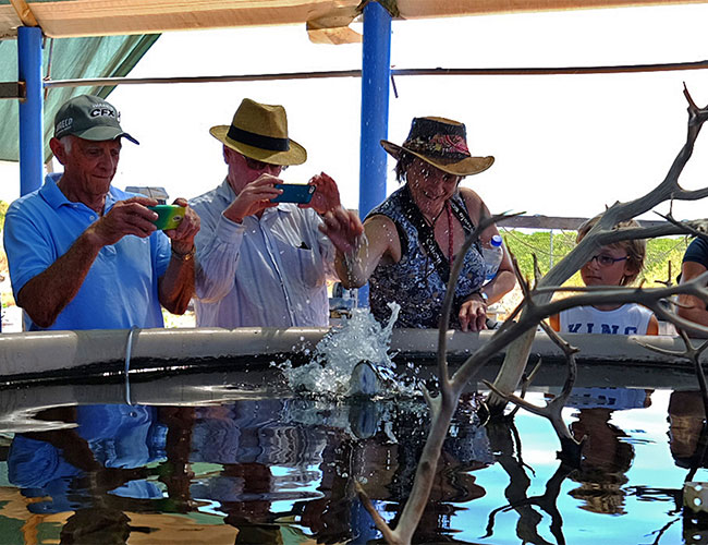 Barramundi feeding One Arm Point Community aquaculture hatchery
